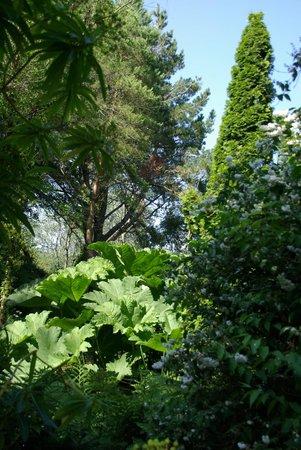 Saint-Germain-des-Vaux, France: quel ami a planté cet arbre?