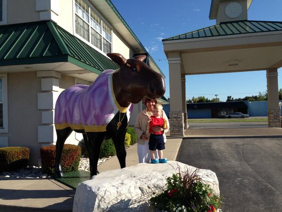 Comfort Inn Manistique: Little man loved the moose