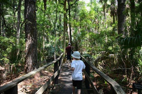 Sea Pines Forest Preserve: Boardwalk