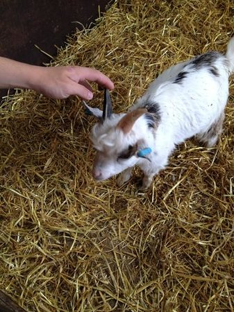 Rare Breeds Centre: one of the kids