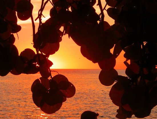 Fort Zachary Taylor Historic State Park : Sunset through the sea grape leaves ...