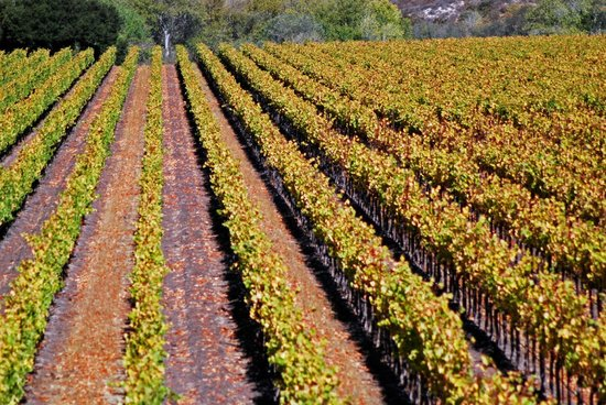 Santa Barbara Wine Country Cycling Tours - Day Tours: Harvest Time!