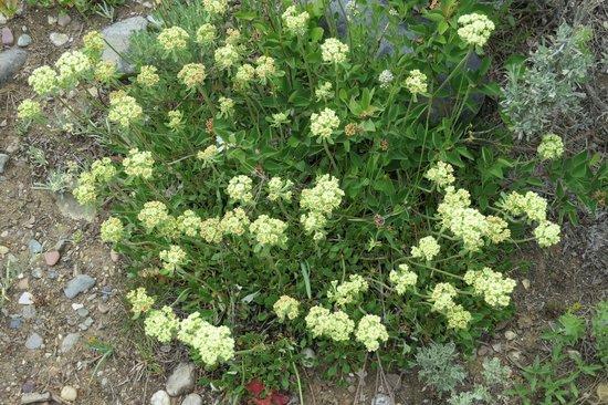Laurance Rockefeller Preserve: Wildflowers