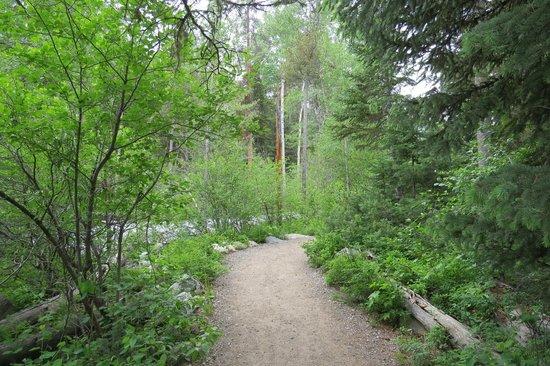 Laurance Rockefeller Preserve: Trail