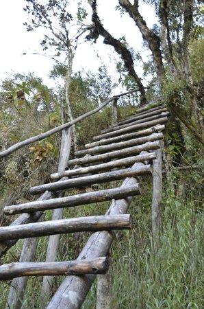 Huayna Picchu: steep climbs (too steep for steps)