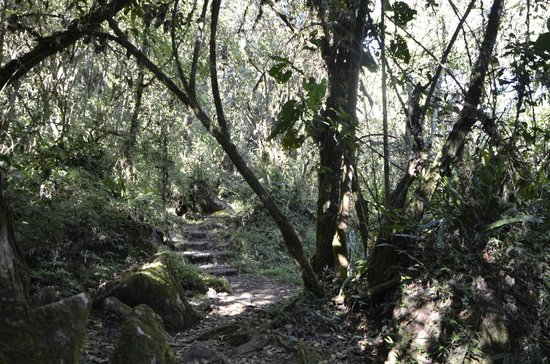Huayna Picchu: through the forest