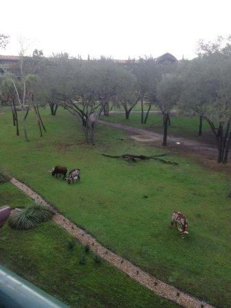 Disney's Animal Kingdom Villas - Kidani Village: View from our room