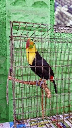 Macuiltepec