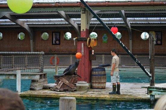 Flamingo Land ltd: sea lion show