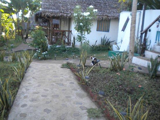 La Merveille: i bungalow/giardino/papaya e gatti