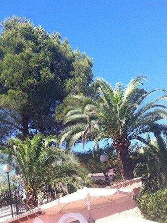 Globales Palmanova: pool surroundings