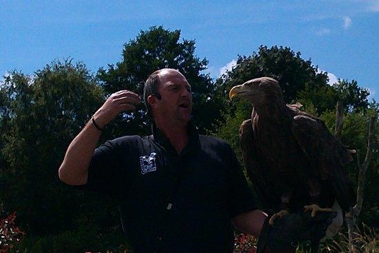 Gauntlet Birds of Prey: Eagle at Gauntlet