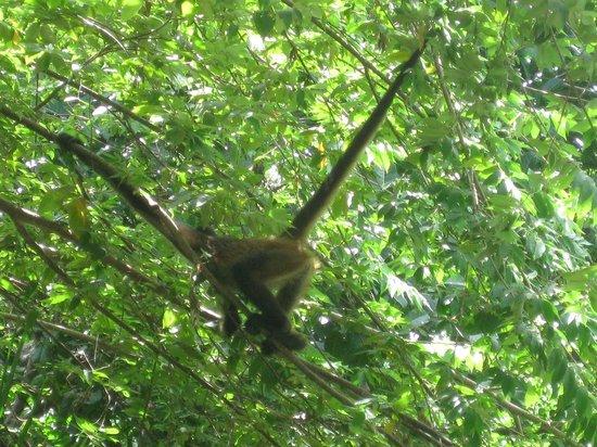 Azul Beach Resort The Fives Playa Del Carmen: don't feed the monkey!