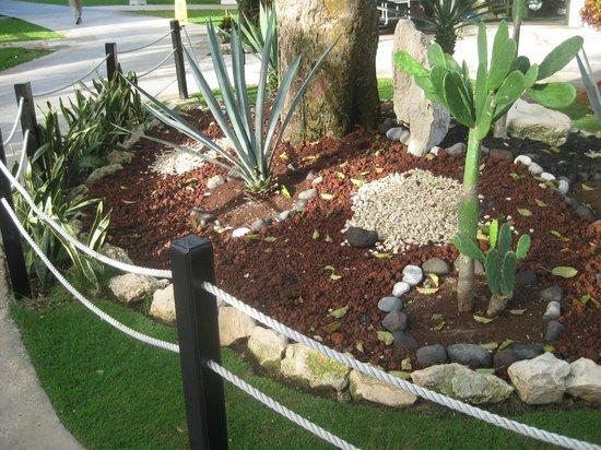 Azul Beach Resort The Fives Playa Del Carmen: garden