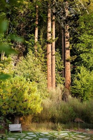 boon hotel & spa : our redwood backdrop