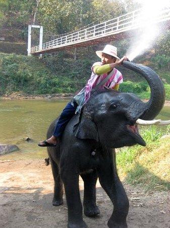 Dusit Island Resort Chiang Rai: Elephant Park