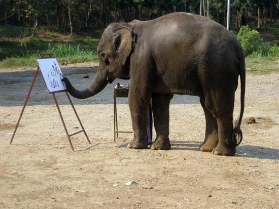 Dusit Island Resort Chiang Rai : Mae Taeng Elephant Park - Elefante pittore