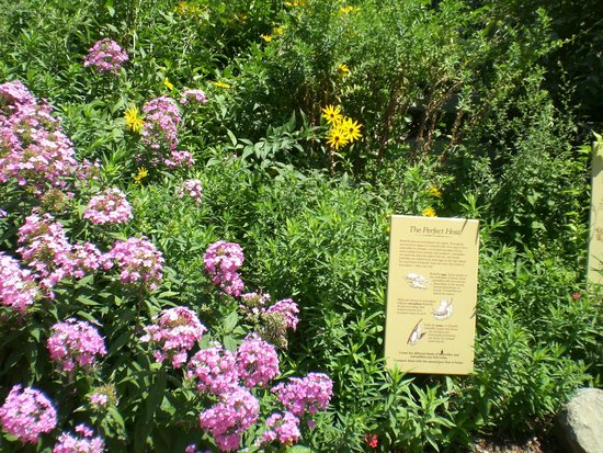 Smithsonian Butterfly Habitat Garden: More Beautiful Flowers, Butterfly  Habitat Garden