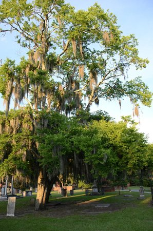 Colonial Park Cemetery: Spanish moss