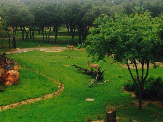 Disney's Animal Kingdom Lodge : View from balcony