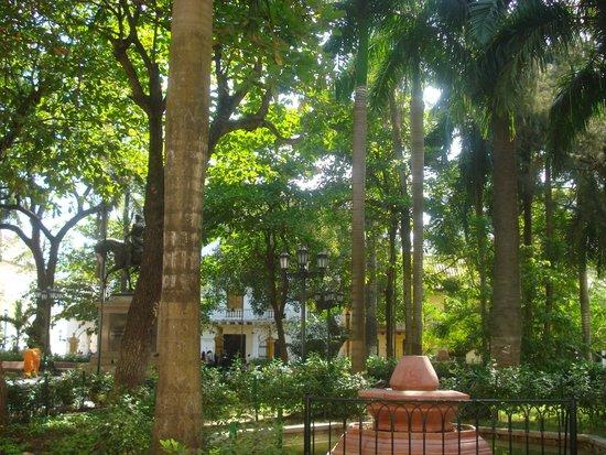 Plaza Bolivar : Hermosa vegetación Verde
