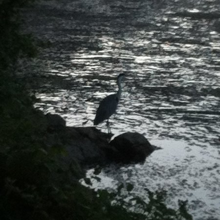 Lily Ponds: A heron as the sun is setting.