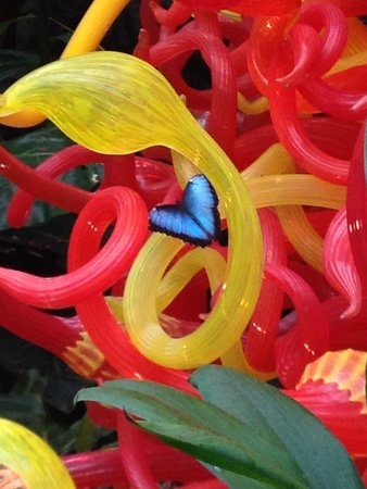 Franklin Park Conservatory and Botanical Gardens : Butterflies!