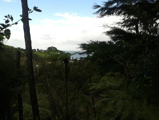 Te Mata Lodge: Beautiful bush view