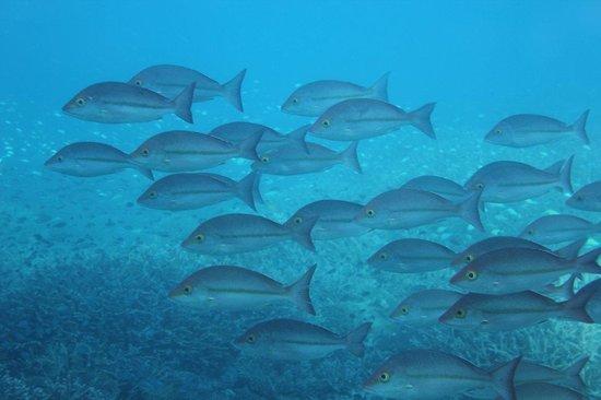 Heron Island Resort: Semi Submergable Tour