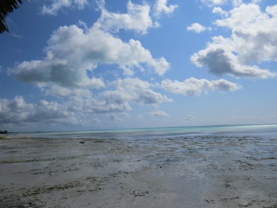 Coral Rock Zanzibar : View from the restaurant at low tide.