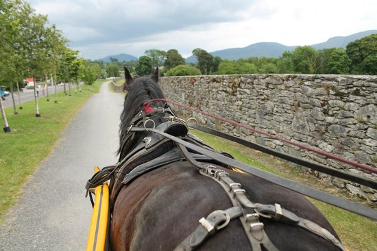 Killarney National Park: Pearl, Our Jaunting Car Engine