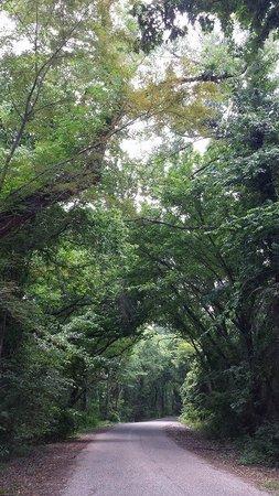 Bonham State Park: The road around the lake