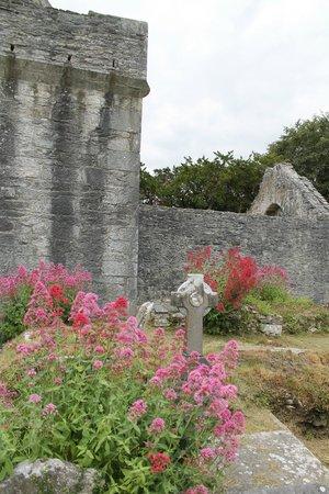 Muckross Abbey : Fantastically Beautiful