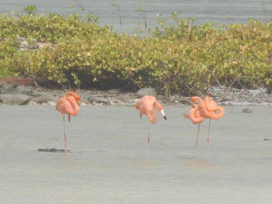 Flamingo Sanctuary : Flamingos