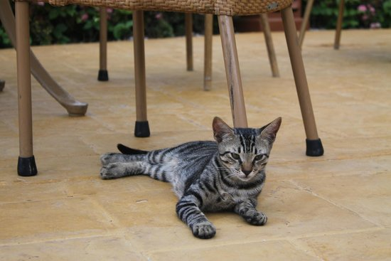 Iberostar Rose Hall Beach Hotel: resident cat