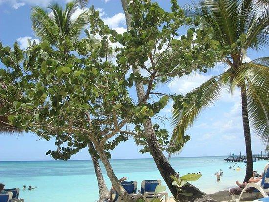 Dreams La Romana Resort & Spa : Beach view