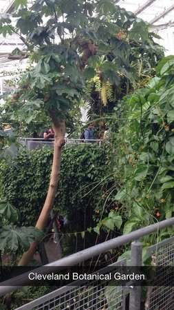 Cleveland Botanical Garden: This was in the indoor part, in the canopy