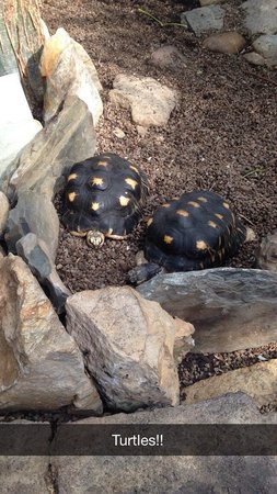 Cleveland Botanical Garden: Turtles in the indoor part