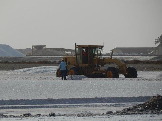 Salt Flats : Salina