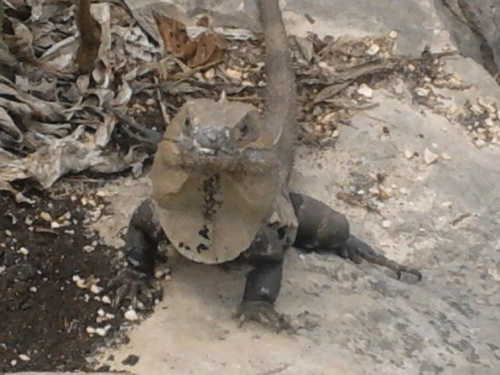 Villa Dolce Vita - Soliman Bay: Our little friend at the Tulum ruins