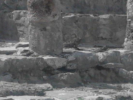Villa Dolce Vita - Soliman Bay: Tulum ruins- iguana's abound on this building!