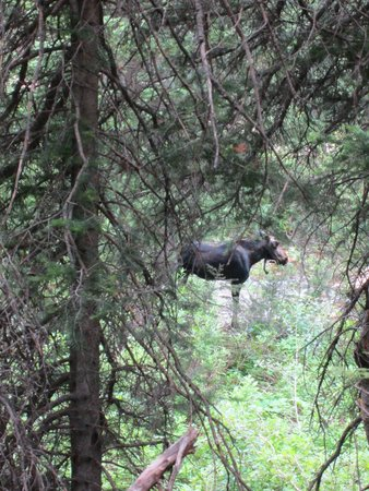 Donut Falls: Our moose friend