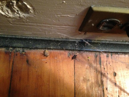 Prospect Place Bed and Breakfast: Dirt, dead beetles and cobwebs at outlet behind bed.