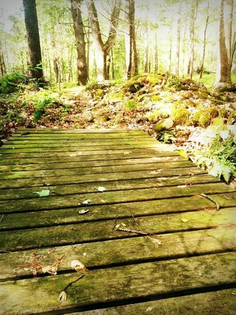 Shadow Mountain Escape: This little bridge is part of the walking trail around the property.