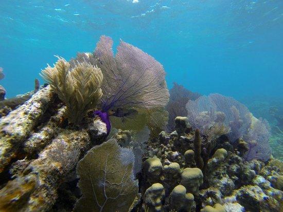 E-Z Boy Tours - Private Tour : Coral gardens