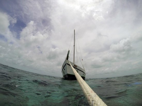 E-Z Boy Tours - Private Tour : The sail boat anchored up