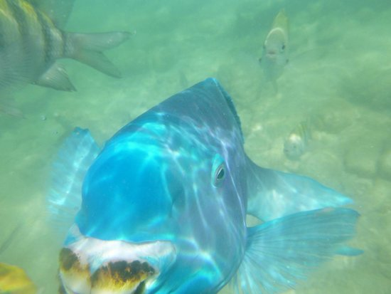 De Palm Island: blue angel fish up close and personal