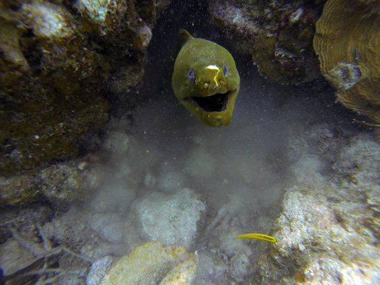 E-Z Boy Tours - Private Tour: Moray eel