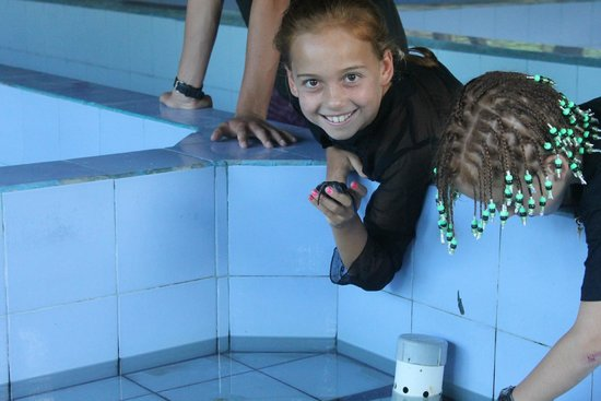 Turtle Conservation and Education Centre : Kids loved it