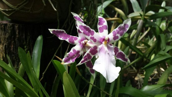 Xandari Resort & Spa: Some of the orchids in the orchid garden